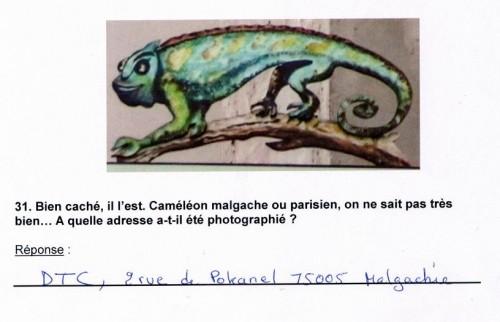 caméléon dtc.JPG