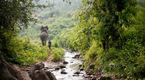 Elephant Trek Laos-19-XL.jpg